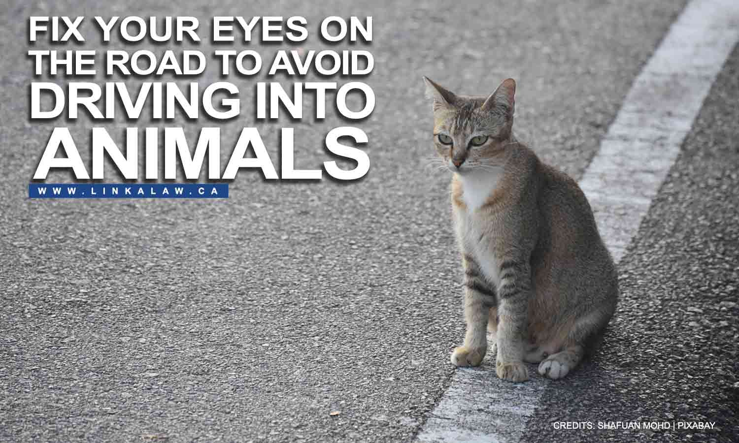 Fix your eyes on the road to avoid driving into animals