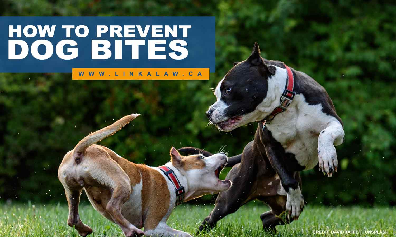 How to Prevent Dog Bites